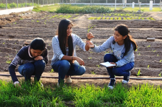 Enlargement: Peruvian students inspect plant growth on a field.