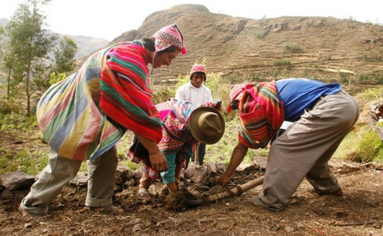 Enlargement: Farmers with typical Andean clothing working in the field. They are the target group of Climandes.