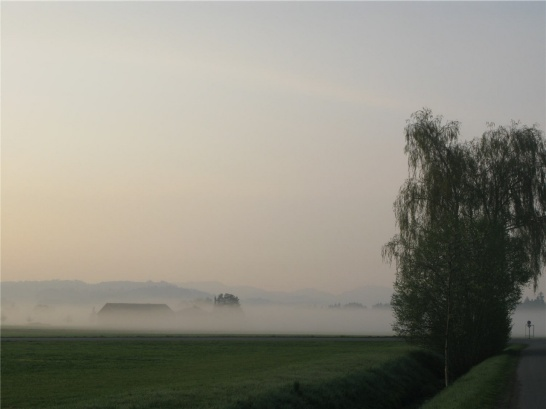 Enlargement: Bodennebel im Feld